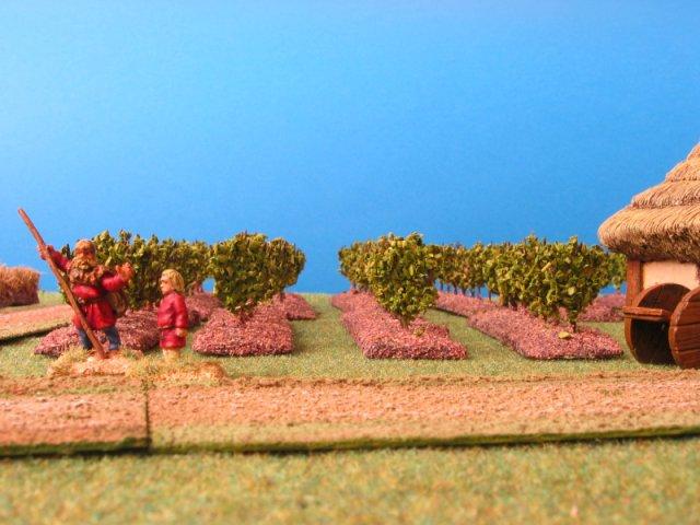 vignes et vignobles DA_vineyard2